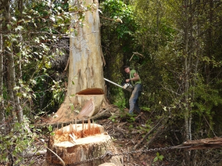 Portable Sawmilling and Logging Services
