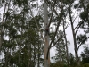Portable Sawmilling Services -  Rope work