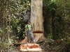 Portable Sawmilling Services - Preparing to fell